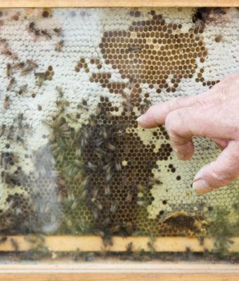 Surveiller la qualité de l'eau grâce à… des abeilles